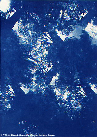 "Thomas Kellner: Pinetrees 04, 1997, Cyanotype, 16,4x23,5 cm/6,4""x9,2"", 10+3"
