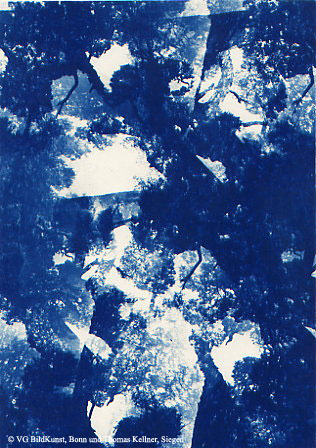 "Thomas Kellner: Pinetrees 06, 1997, Cyanotype, 16,4x23,5 cm/6,4""x9,2"", 10+3"