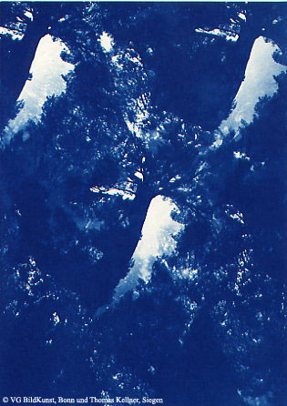 "Thomas Kellner: Pinetrees 08, 1997, Cyanotype, 16,4x23,5 cm/6,4""x9,2"", 10+3"