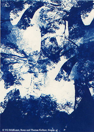 "Thomas Kellner: Pinetrees 09, 1997, Cyanotype, 16,4x23,5 cm/6,4""x9,2"", 10+3"