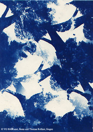 "Thomas Kellner: Pinetrees 10, 1997, Cyanotype, 16,4x23,5 cm/6,4""x9,2"", 10+3"
