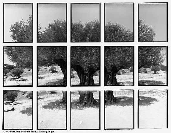 "Thomas Kellner: 07#01 olive tree, 1998, BW-Print, 24,5x18,7 cm/9,5""x7,3"", edition 10+3"