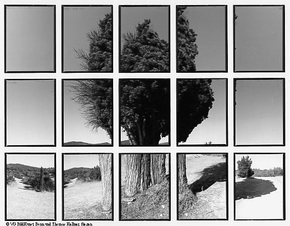 "Thomas Kellner: 07#04 cypress, 1998, BW-Print, 24,5x18,7 cm/9,5""x7,3"", edition 10+3"